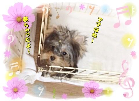 tsukichan.jpg