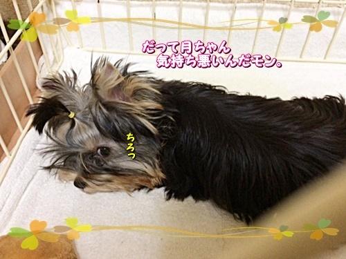 tsukicyan2.jpg