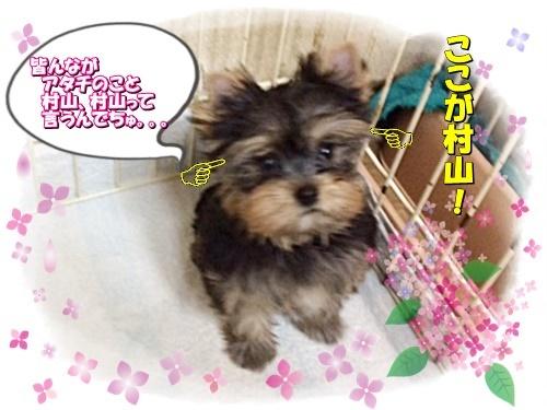 tsukicyan3.jpg