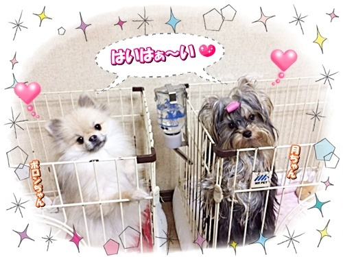 tsukiporon1.jpg