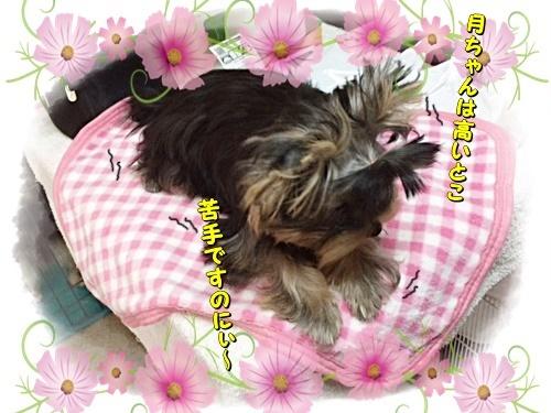 tsukisama.jpg