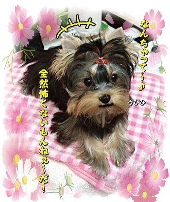 tsukisama1.jpg