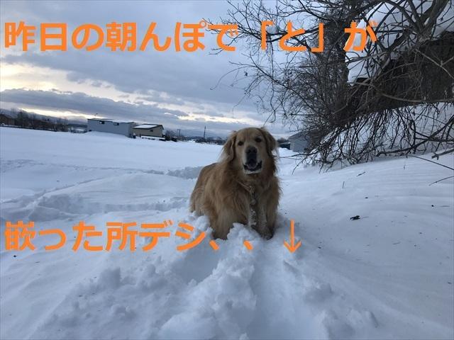 IMG_6451R03.jpg