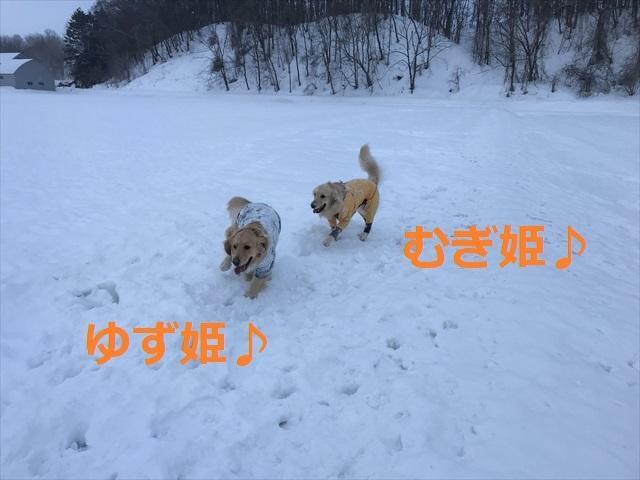 IMG_6478R03.jpg