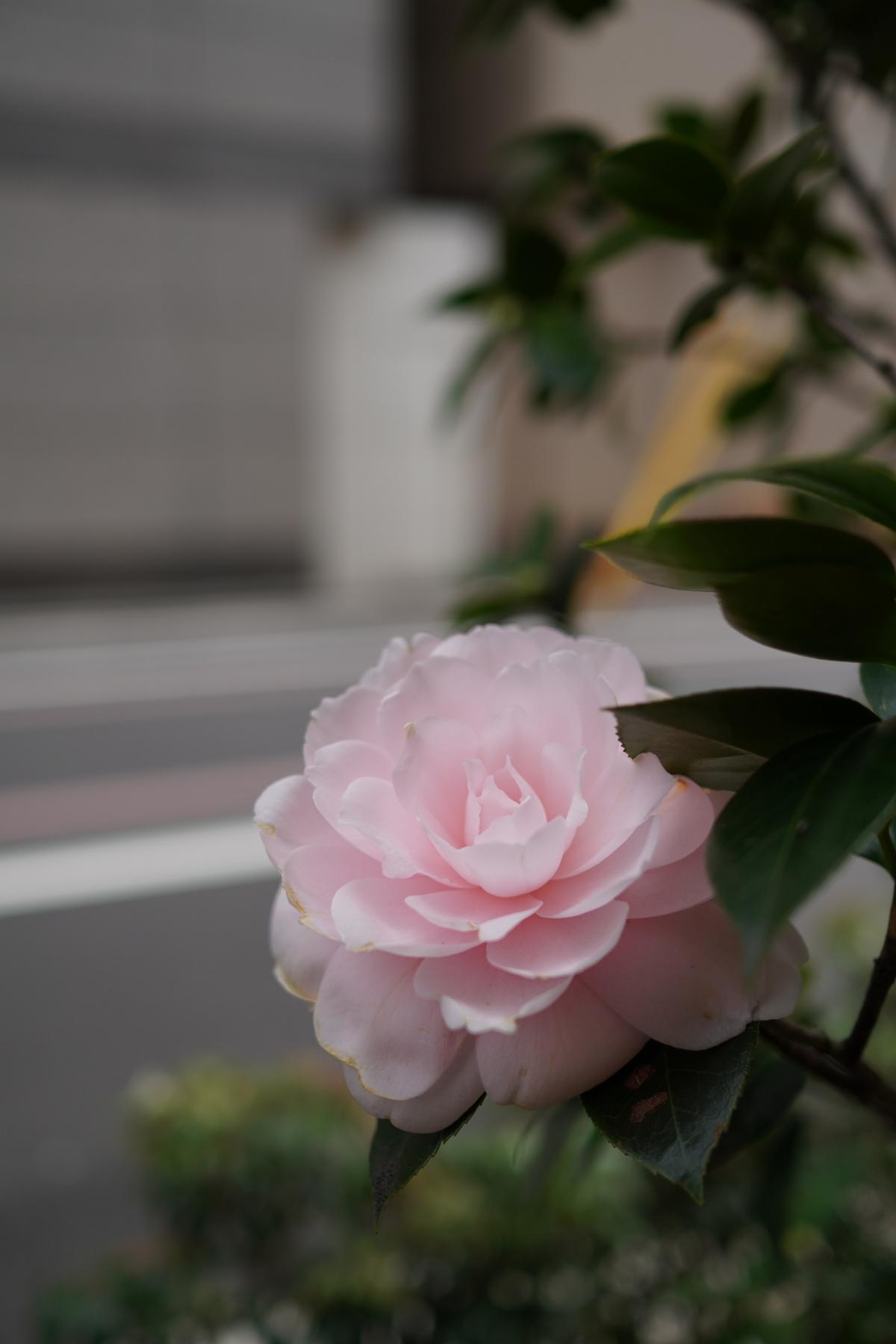 B6_02401.jpg