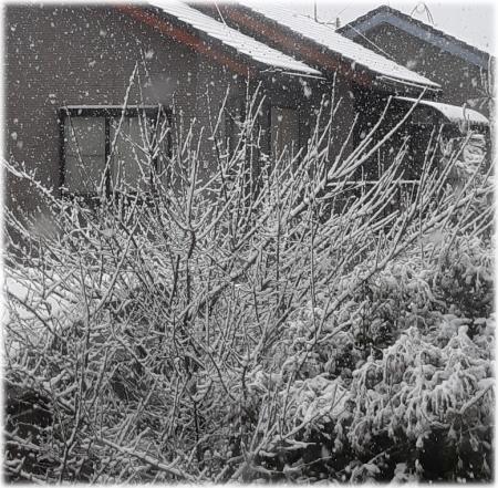 季節外れの大雪と02