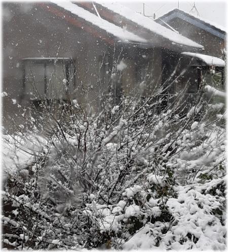 季節外れの大雪と03