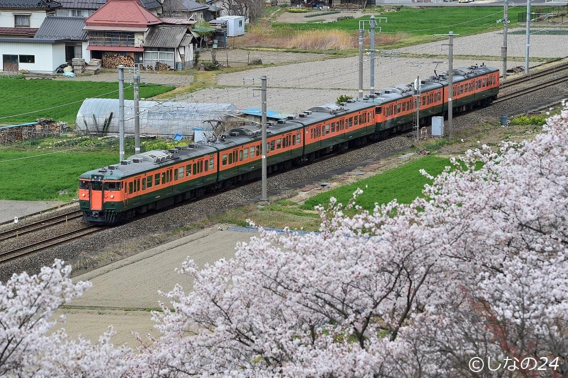 115系湘南5連 桜