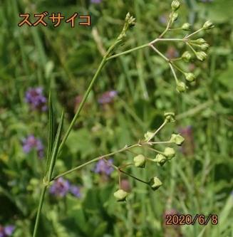 200608-2suzusa.jpg