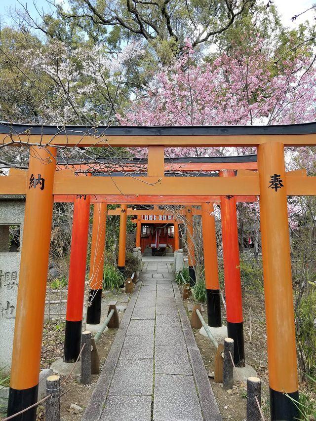 早咲き桜3