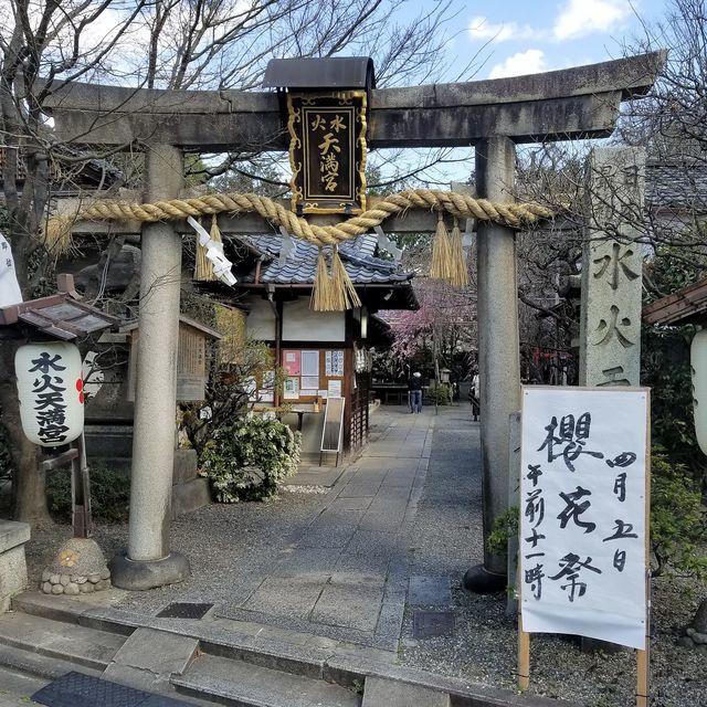 早咲き桜8
