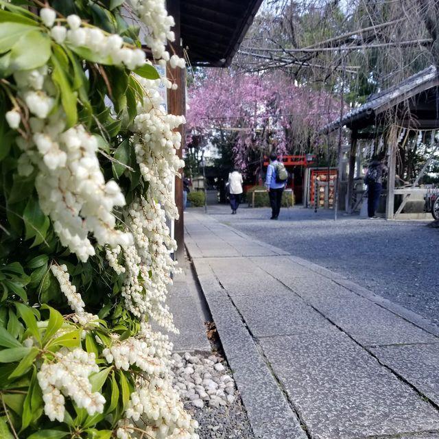 早咲き桜9