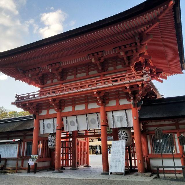 早咲き桜24