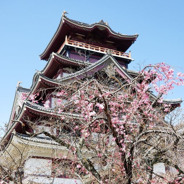 伏見桜_013
