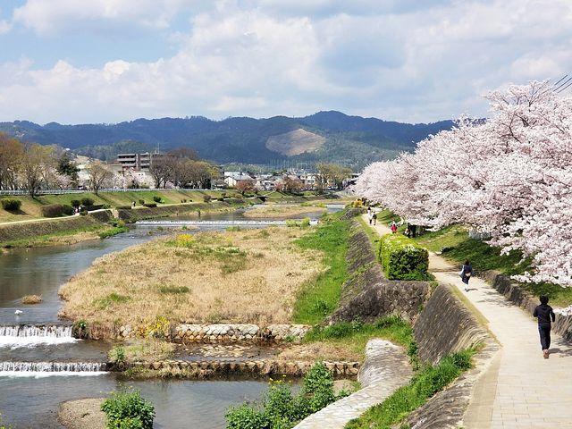 京都桜0404(小)_001