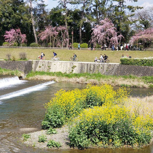 京都桜0404(小)_010