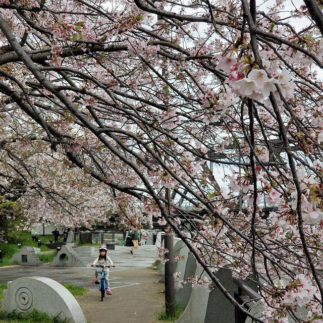 散歩(小)_014