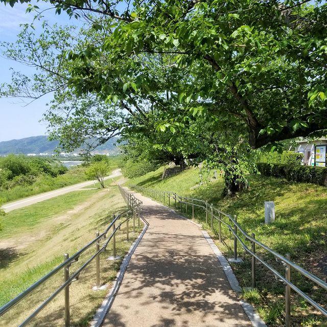 流れ橋ポタリング(小)_002