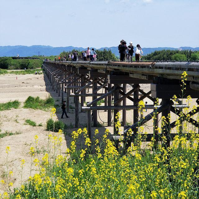 流れ橋ポタリング(小)_006