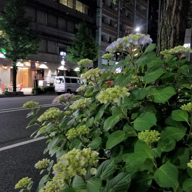 リカータ(小)_020