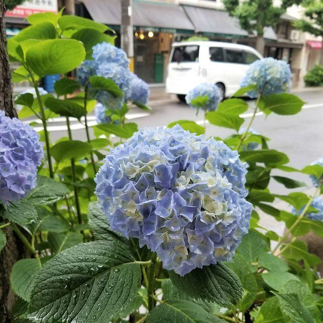コロンボ(小)_002