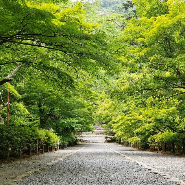 嵐山ポタ(小)_007