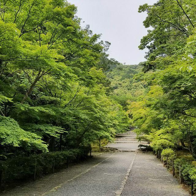 嵐山ポタ(小)_008