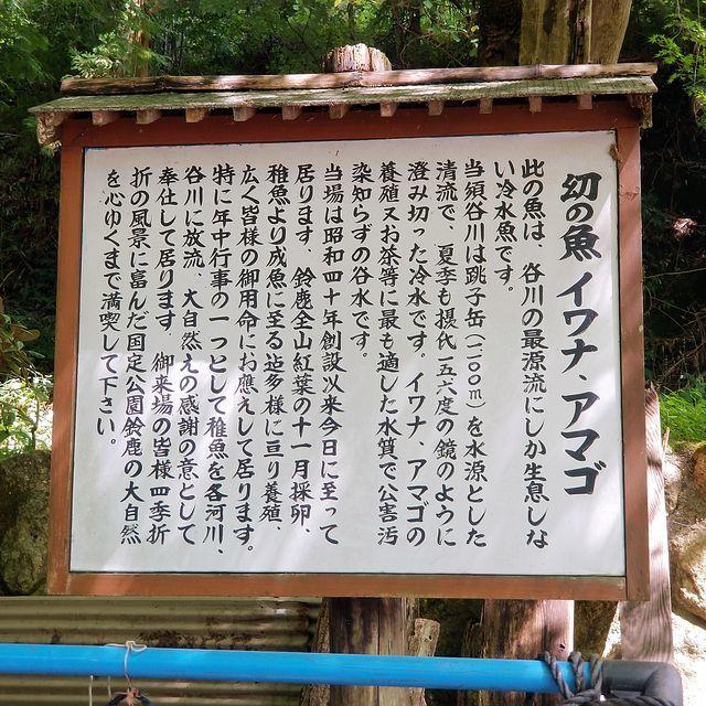 池田養魚場(小)_014