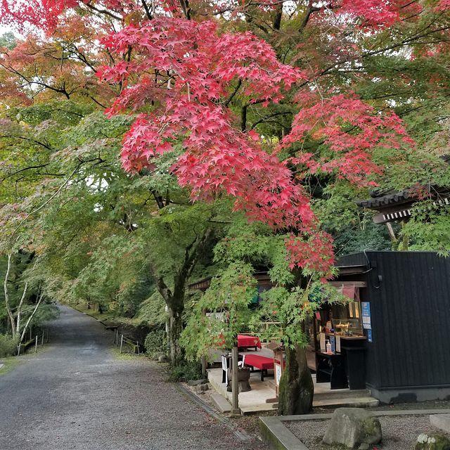 三井寺(小)_001