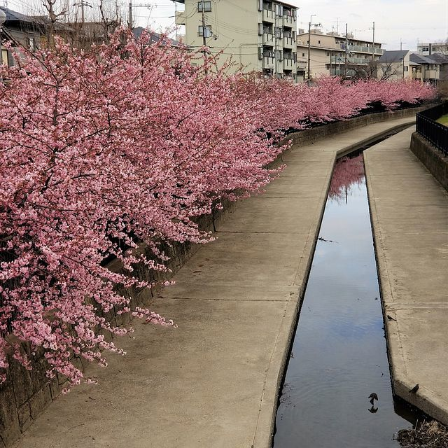 グーグー藤カレー(小)_013