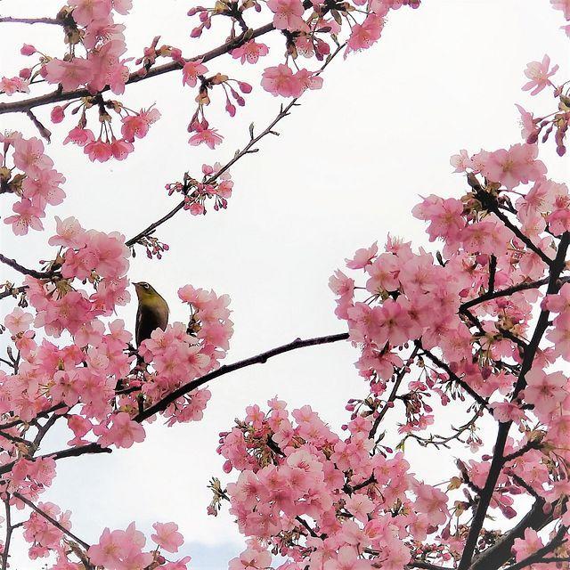 グーグー藤カレー(小)_016