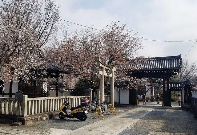 桜210326(小)_001