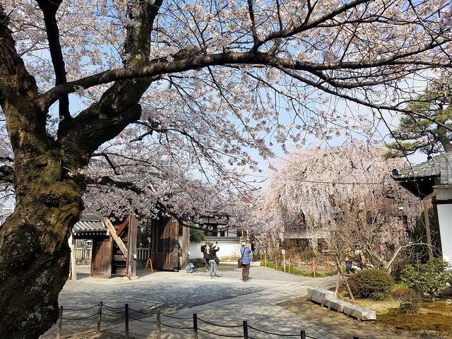 桜210326(小)_003