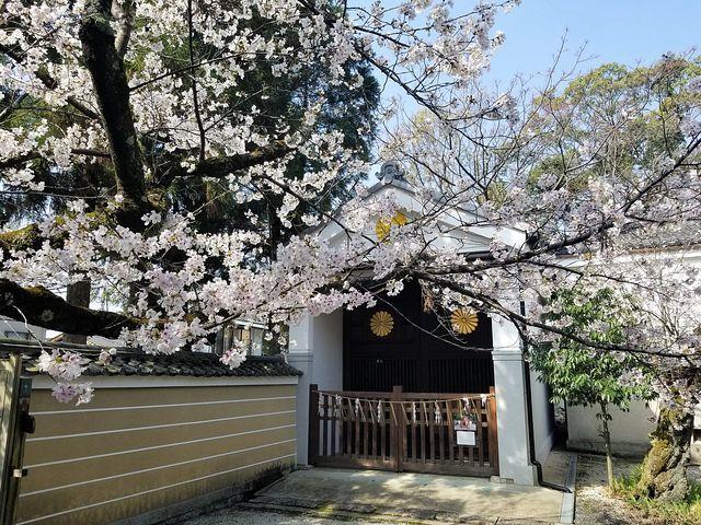桜210326(小)_004