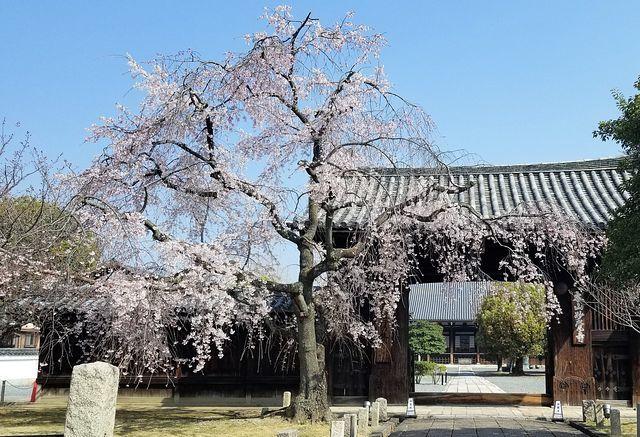 桜210326(小)_006