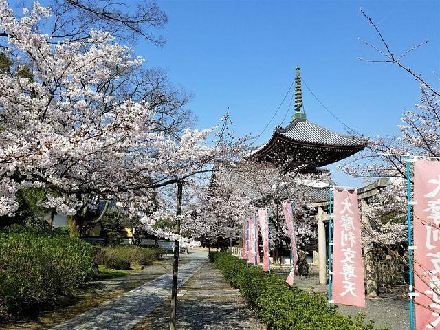 桜210326(小)_008
