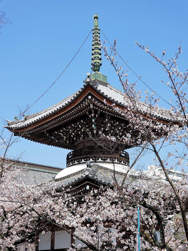 桜210326(小)_009