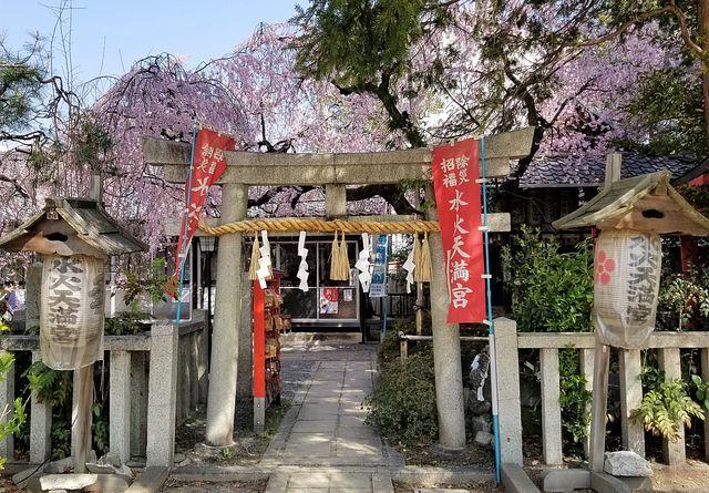 桜210326(小)_010