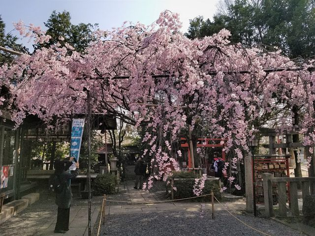 桜210326(小)_011