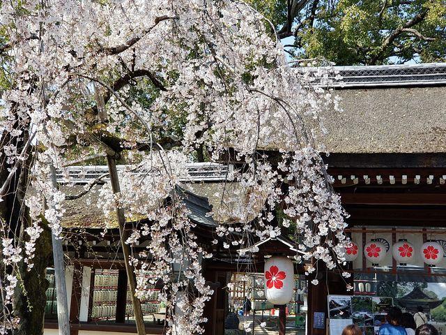 桜210326(小)_017
