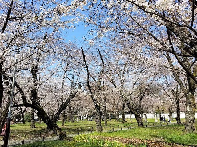 桜210326(小)_019