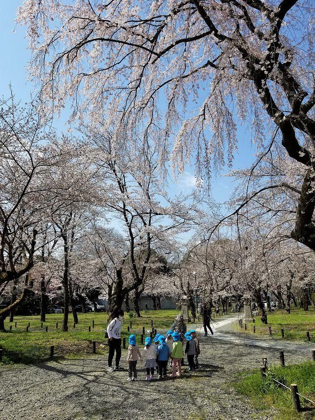 桜210326(小)_018