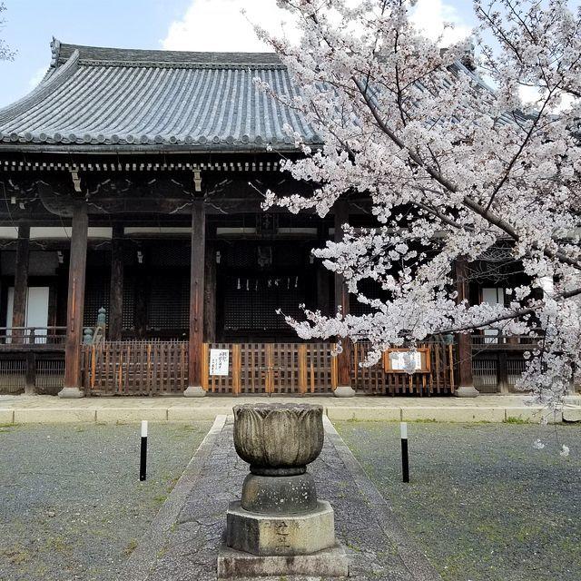 桜210326(小)_020