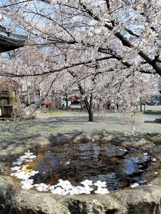 桜210326(小)_021