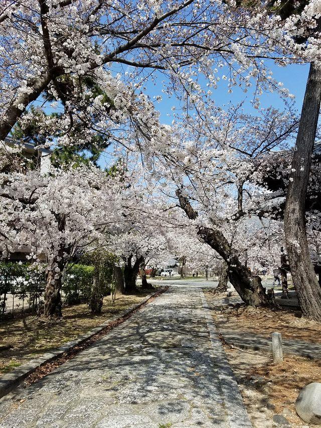 桜210326(小)_022
