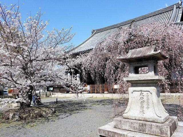 桜210326(小)_023