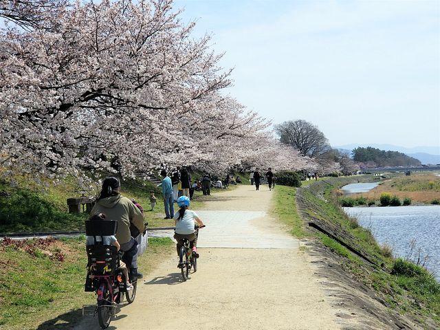 京都桜2(小)_009