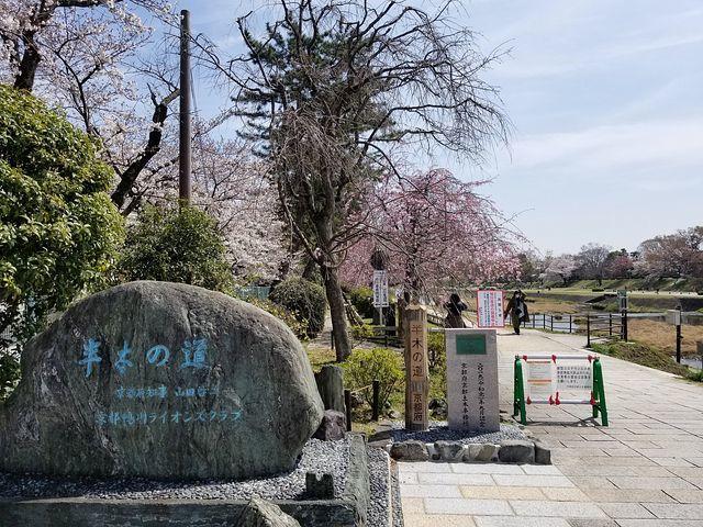 京都桜2(小)_010