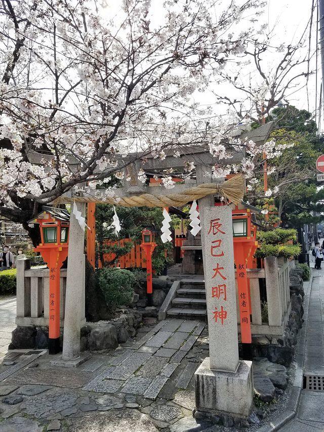 京都桜2(小)_013