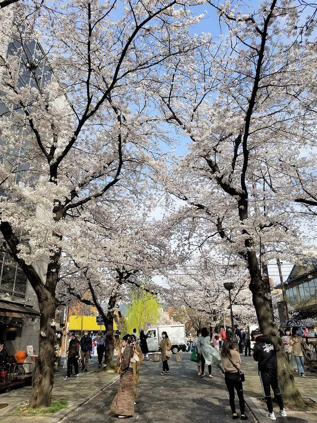 京都桜2(小)_014